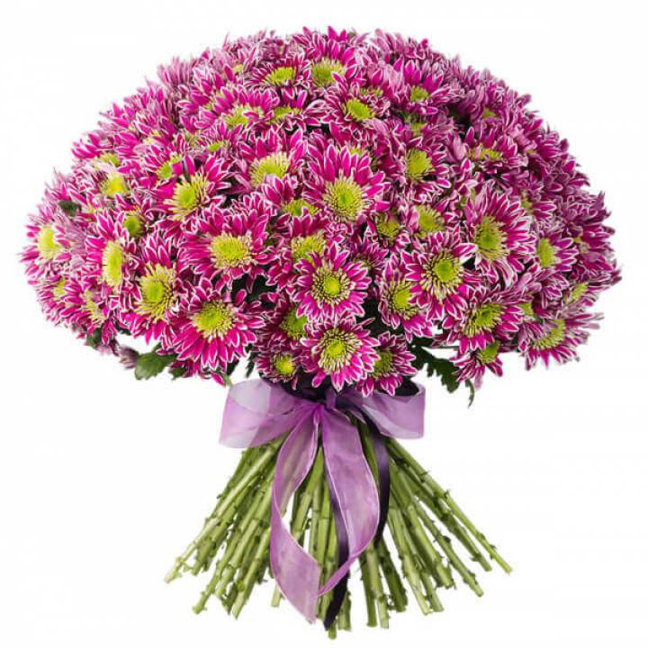 Букет хризантемы 51 ветка сиренево-белой