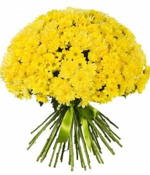Хризантема - яркий желтый шар