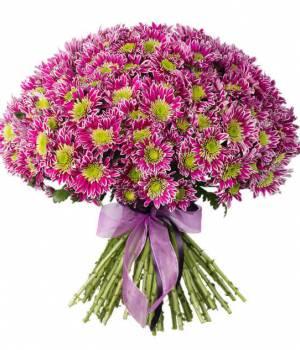 https://www.royal-flowers.dp.ua/image/cache/catalog/%20chrysanthemum/Chris,P2051,P20,P20-300x350.jpg.pagespeed.ce.gUl4WccsK6.jpg