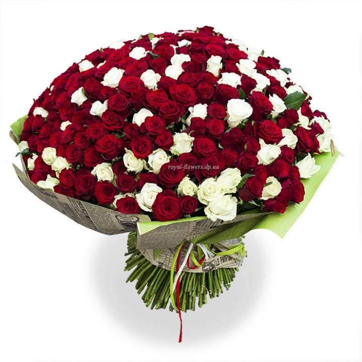 301 красная и белая роза  - большой букет