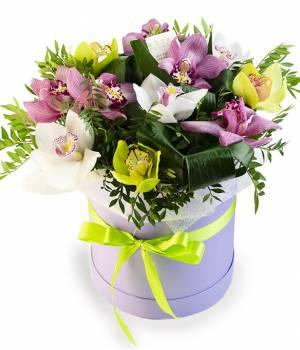 Камелия № 11 - Орхидея в коробке