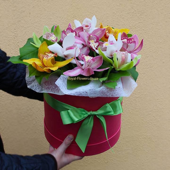 Орхидея в шляпной коробке - Камелия