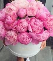 Розовые пионы (импорт) в коробке