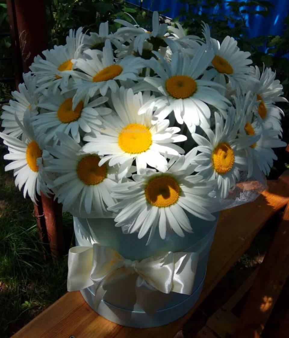 Цветов, букет из 30 ромашек купить днепр