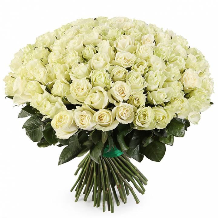 Букет из 101 белой  импортной розы - сорт Мондиаль