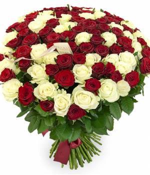 101 роза красная и белая сорт Престиж и Аваланч