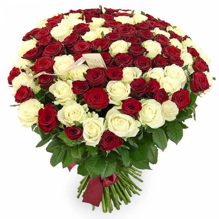 101 роза красная и белая сорт: Престиж и Аваланч
