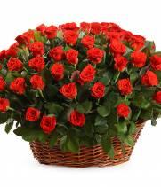 Корзина 101 алая роза Эль Торо