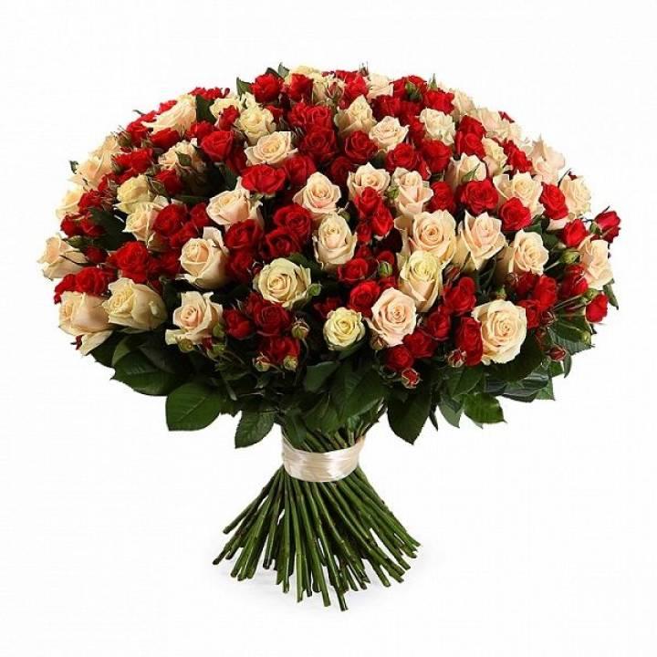 """Букет Ягоды на снегу"""" из 101 кустовой розы  Кремово-Красного цвета"""