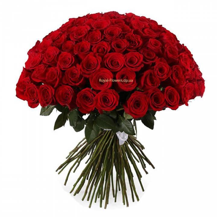 101 красная роза, сорта Freedom