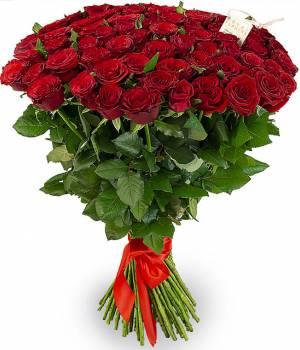 51 красная роза сорт Гран-При высота 70-80см
