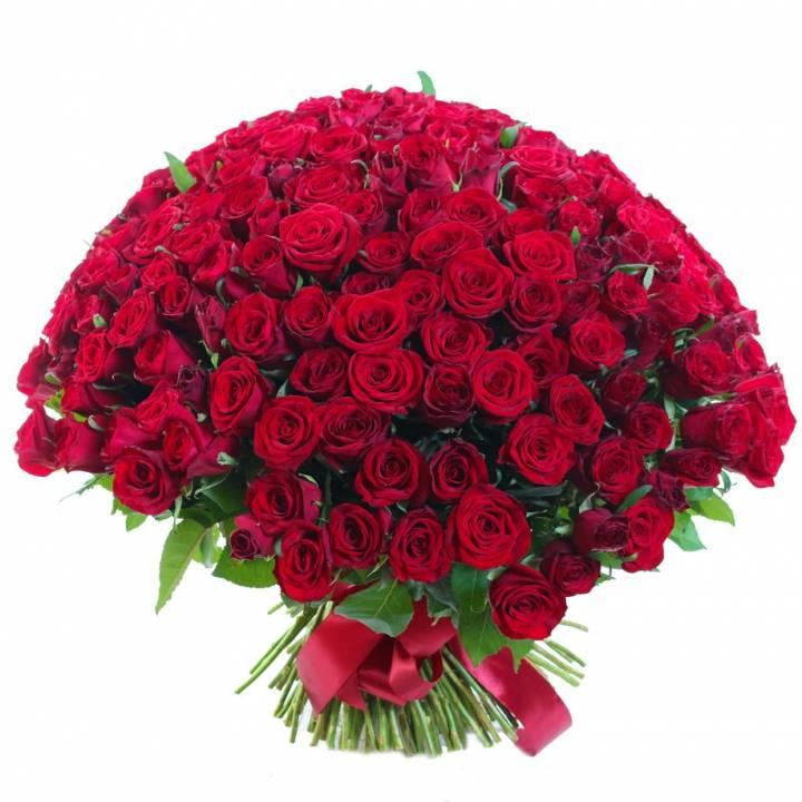 Букет из 151 красной розы сорт Гран-При