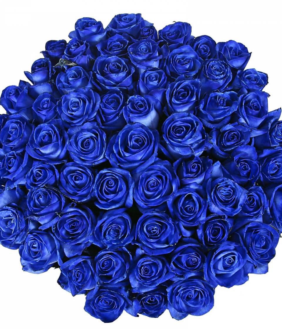 Купить синие розы цветы фото