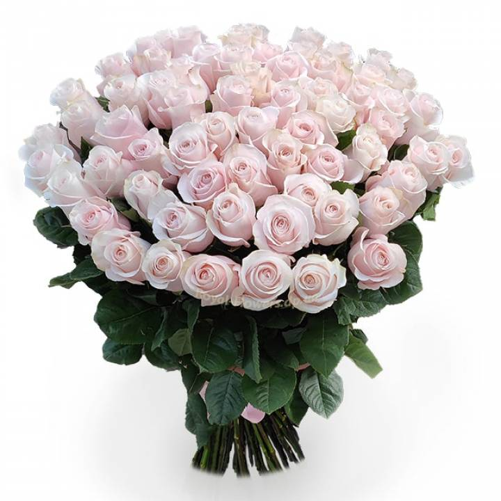 "51 розовая премиум роза ""Эквадор"""