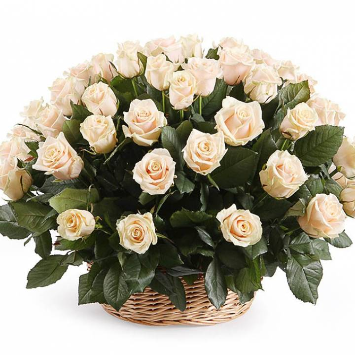 Корзина кремовых роз сорт Талея 51 шт