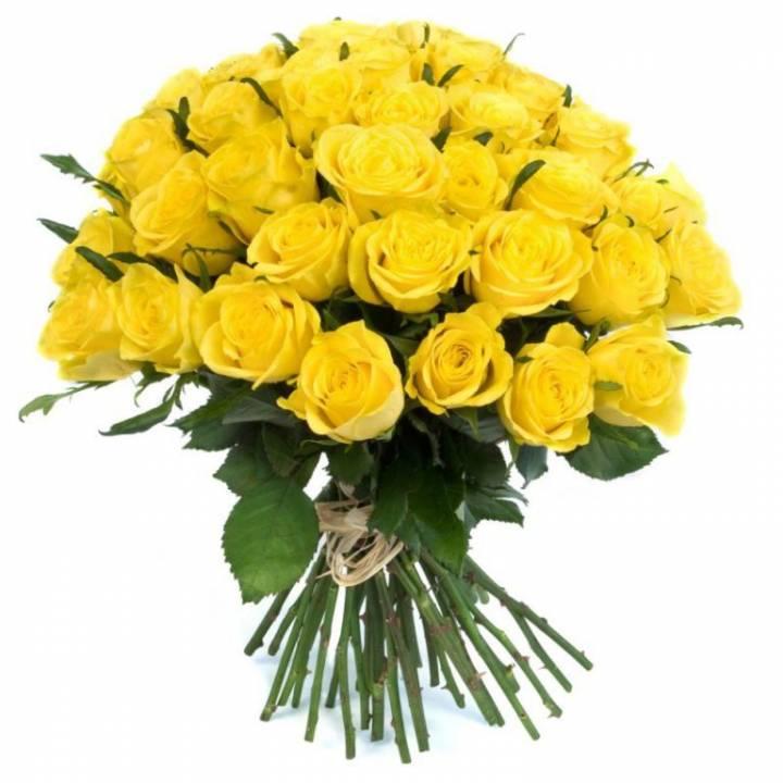 51 желтая роза - сорт: Пенни Лейн - Днепр