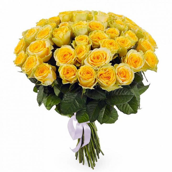 51  желтая роза, Иллиус