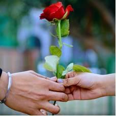 Цветы к 14 февраля: готовимся ко Дню Влюбленных заранее