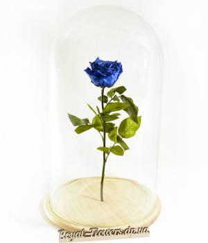 Долговечная живая синяя роза