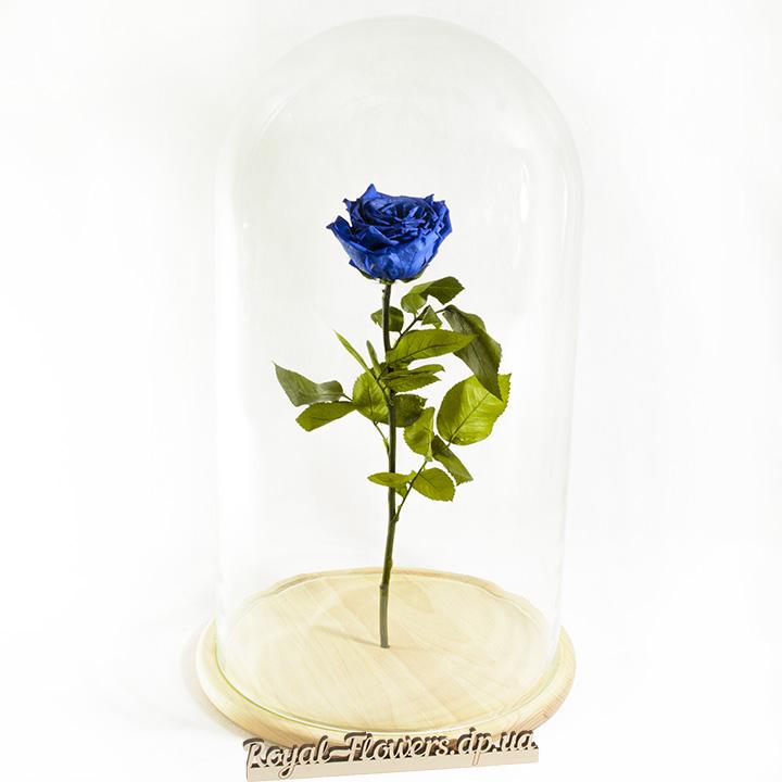 Синяя роза в колбе - вечная - стабилизированная