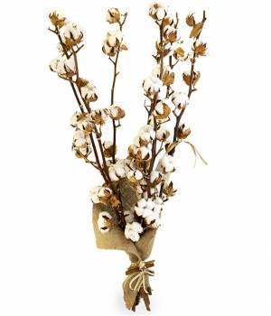 https://www.royal-flowers.dp.ua/image/cache/catalog/khlopok/buket-7-vetok-khlopka-royal-flowers-300x350.jpg.pagespeed.ce.AT2_acC1qd.jpg