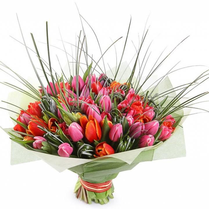 Букет цветов: 101 тюльпан фиолетовый и красней