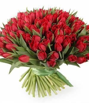 101 красный тюльпан в букете Рубин