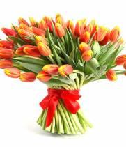 101 тюльпан: красный с желтым отливом