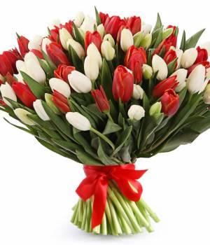 101 тюльпан красно-белый в букете