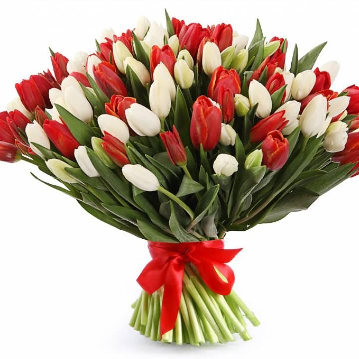 Букет 101 тюльпан: цвет красный и белый