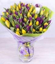101 желтый и фиолетовый тюльпан