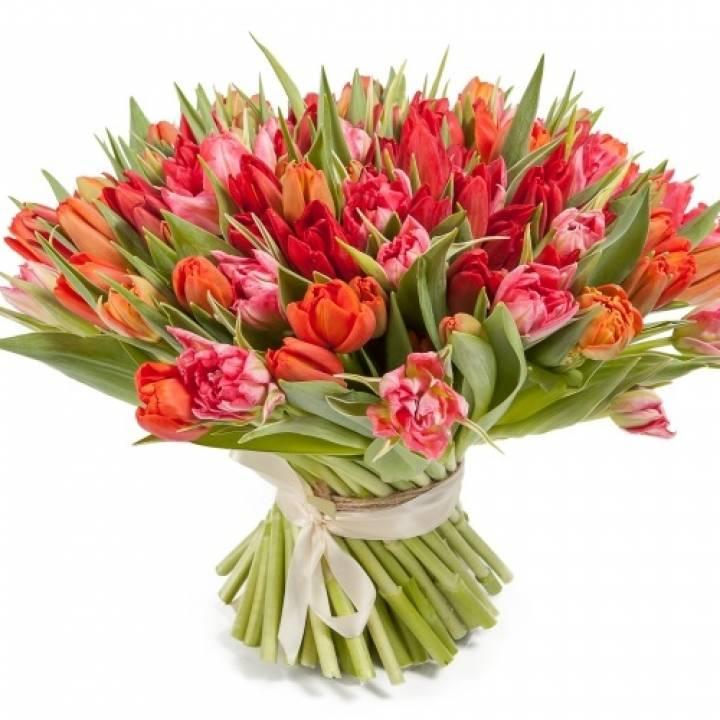 Букет Феличита из 101 красно-розового тюльпана