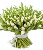 151 тюльпанов - букет Звездопад