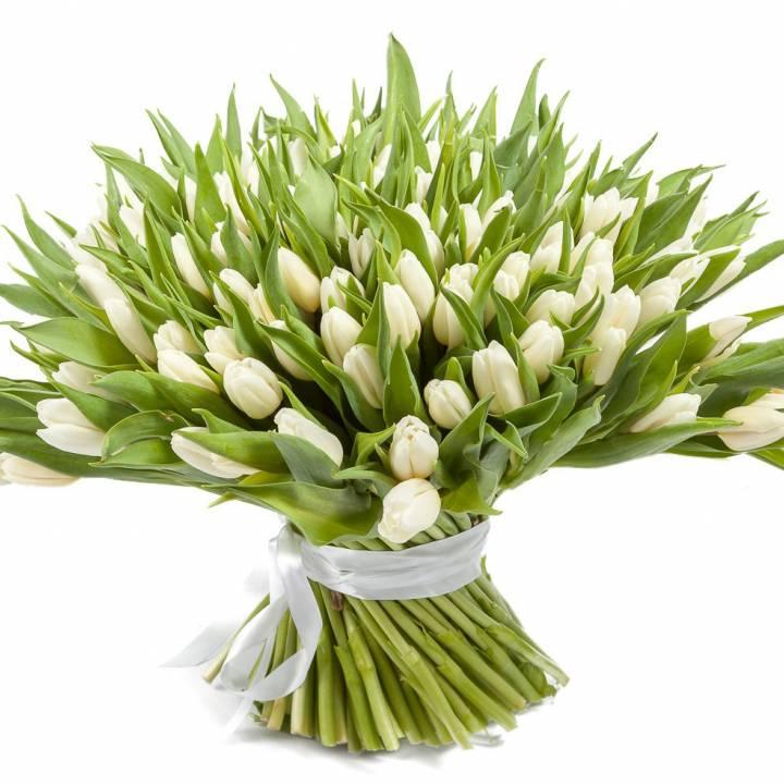151 белый тюльпан  в букете Звездопад