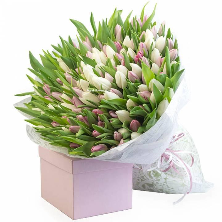 Букет из 151 белого и розового тюльпана