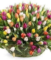 251 тюльпан  в корзине