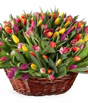 https://www.royal-flowers.dp.ua/image/cache/catalog/tulips/251%20angels-300x350.jpg