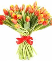 51 красно - желтый тюльпан