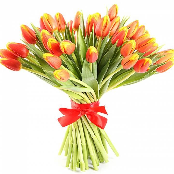 Букет 51 красно - желтый тюльпан
