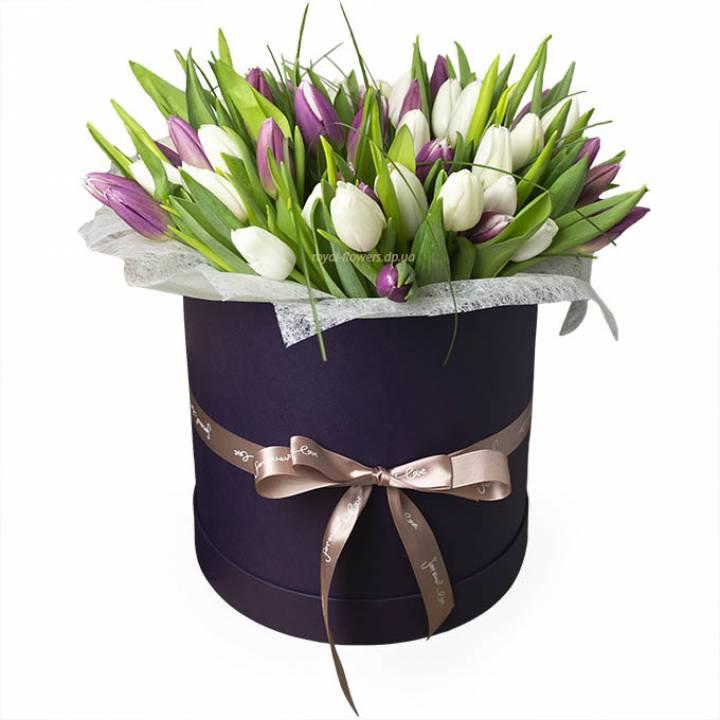 51 фиолетовый и белый тюльпан в коробке