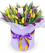 51 желтый и фиолетовый тюльпан в коробке