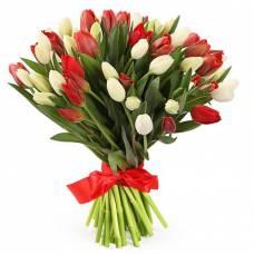 51 белый и красный тюльпан