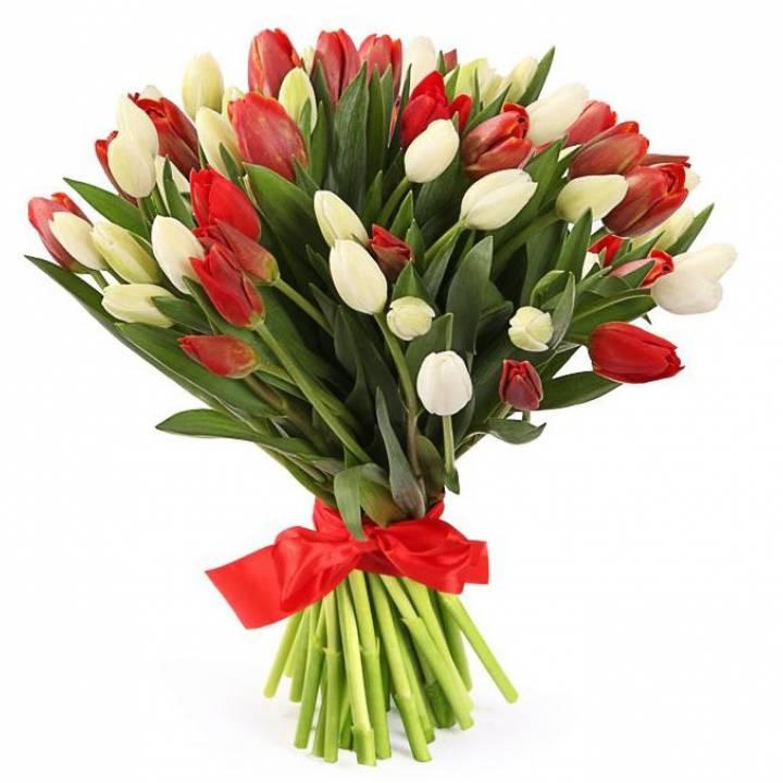 Букет 51 тюльпан - красный и белый