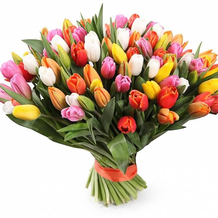 101 разноцветный тюльпан в букете Микс