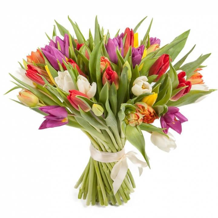 Букет 51 тюльпан: желтый, фиолетовый, белый красный